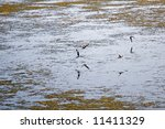 Wildlife Refuge Birds On An...