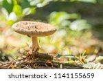 parasol mushroom  macrolepiota... | Shutterstock . vector #1141155659