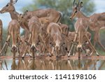a horizontal  colour image of a ...   Shutterstock . vector #1141198106