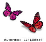 two colorful monarch butterfly...   Shutterstock . vector #1141205669