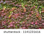 colorful red lilac green and ... | Shutterstock . vector #1141231616