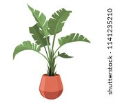 palm. plant in the pot  for... | Shutterstock .eps vector #1141235210