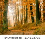 autumn forest with path | Shutterstock . vector #114123733