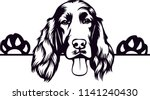 Irish Setter Dog Breed Pet