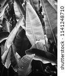 black and white tropical leaves | Shutterstock . vector #1141248710