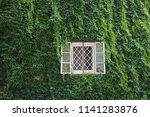 Window In Facade Overgrown ...