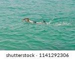 man in a scuba mask swims in... | Shutterstock . vector #1141292306
