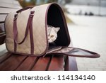 Cat In Pet Carrier On A Park...