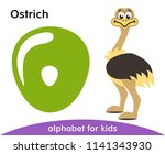 Stock vector green letter o and cute ostrich english alphabet with animals cartoon characters isolated on 1141343930