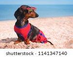 Cute Dog Dachshund Breed  Blac...