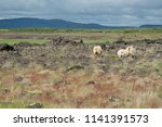 icelandic landscape with sheep   Shutterstock . vector #1141391573