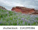 volcanic hump among lupine...   Shutterstock . vector #1141395386