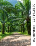 beautiful palm grove or forest. ... | Shutterstock . vector #1141415870