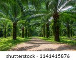 beautiful palm grove or forest. ... | Shutterstock . vector #1141415876