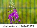 one branch of wild flowers of... | Shutterstock . vector #1141419179