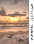 Small photo of Golden sunset over hatchling turtles Caretta caretta as they travel over the white sand of Clam Pass Beach to the ocean in Naples, Florida