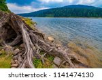 old  dry trunk near a sea   dam ... | Shutterstock . vector #1141474130