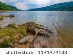 old  dry trunk near a sea   dam ... | Shutterstock . vector #1141474133