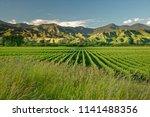 wineyard  winery new zealand ...   Shutterstock . vector #1141488356