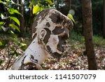 weird discarded mannequin... | Shutterstock . vector #1141507079