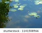 Close Up Of Floating Leaves Of...