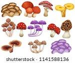 set of different mushrooms... | Shutterstock .eps vector #1141588136