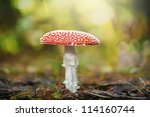 Toadstool In The Forest Or An...