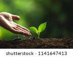 Plant A Tree Natural Tree Green ...
