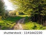 walking footpath in green grass ...   Shutterstock . vector #1141662230