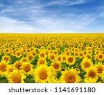 sunflowers field on sky... | Shutterstock . vector #1141691180