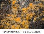 abstract rusty metal texture ... | Shutterstock . vector #1141736006