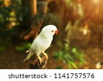 sunshine photo of white parrot...   Shutterstock . vector #1141757576