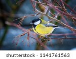 the great tit  parus major   a... | Shutterstock . vector #1141761563