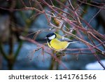 the great tit  parus major   a... | Shutterstock . vector #1141761566