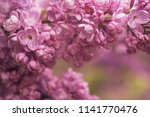 macro image of spring soft...   Shutterstock . vector #1141770476