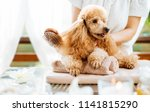 woman scratching dog with a... | Shutterstock . vector #1141815290