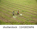 indian farmer spraying... | Shutterstock . vector #1141823696
