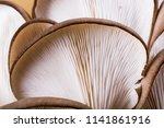 oyster mushroom or pleurotus... | Shutterstock . vector #1141861916