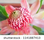 beautiful pink shades on a... | Shutterstock . vector #1141887413