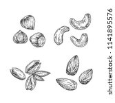 nuts illustration. almond ... | Shutterstock .eps vector #1141895576