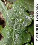 the frozen rain drops. the...   Shutterstock . vector #1141904393