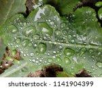 the frozen rain drops. the...   Shutterstock . vector #1141904399