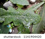 the frozen rain drops. the...   Shutterstock . vector #1141904420