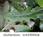 the frozen rain drops. the...   Shutterstock . vector #1141904426