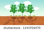 illustration of plants and the... | Shutterstock .eps vector #1141926470