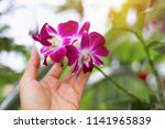 pink orchid flower in touched... | Shutterstock . vector #1141965839