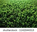 green grass soccer field...   Shutterstock . vector #1142044313