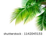 Detail Of Coconut Trees With...