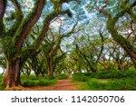 sun shining through green... | Shutterstock . vector #1142050706