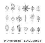 set of tree leaves vector hand... | Shutterstock .eps vector #1142060516